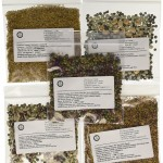 Sprouting Seeds Sampler - One Dozen Types of Seeds
